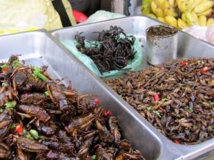 Wie wäre es mit ein paar Käfern oder Spinnen? Markt in Kampong Thom