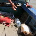 Irriwaddy Delphin Tour - der halbe Fisch ;)