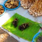 Morgenmarkt in Luang Prabang - Ratten und anderes Getier