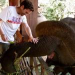 Brave Elefantenlady wird mit Bananen belohnt