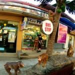 Bus Stop Ao Nang