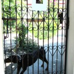 Unser gut bewachtes Appartement - Beware of the dog!