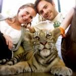Streichel- und Spieleinheiten @ Tiger Kingdom