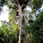 Gibbon Experience - Treehouse 2 (Honeymoon)