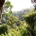 Zipline im Dschungel