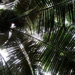 Dschungel - Gibbon Experience