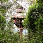 Gibbon Experience - Treehouse Number 7