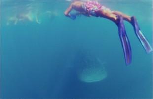 Whaleshark - ein 8m langer Buntanding