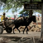 Pferdetransport auf Gili Trawangan