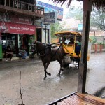 Pferdekutsche im Regen