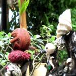 Gartenschmuck auf Gili Air