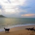 """kleiner Sunset auf Kanawa mit der schwarzen Hundeversion von """"Lost"""""""