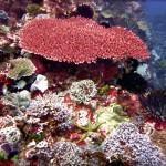Farbenpracht Unterwasser