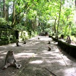 Monkey Forest in Ubud